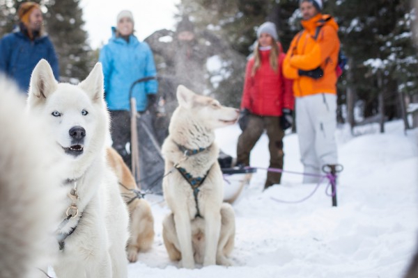 dog_sledding_great_divide_trail_2014_noel_hendrickson_1_horizontal