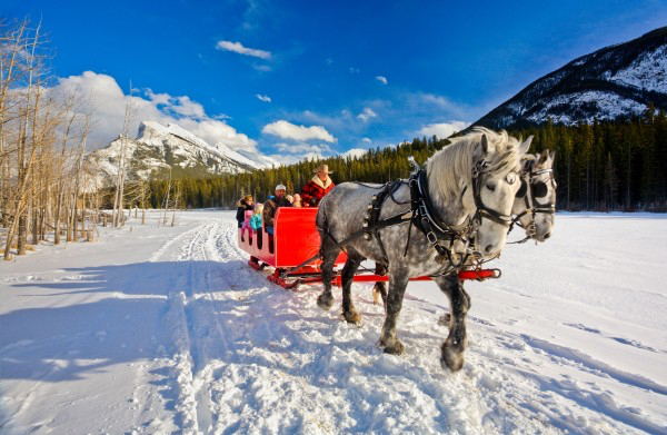 horse_sleigh_ride_banff_paul_zizka_3_horizontal